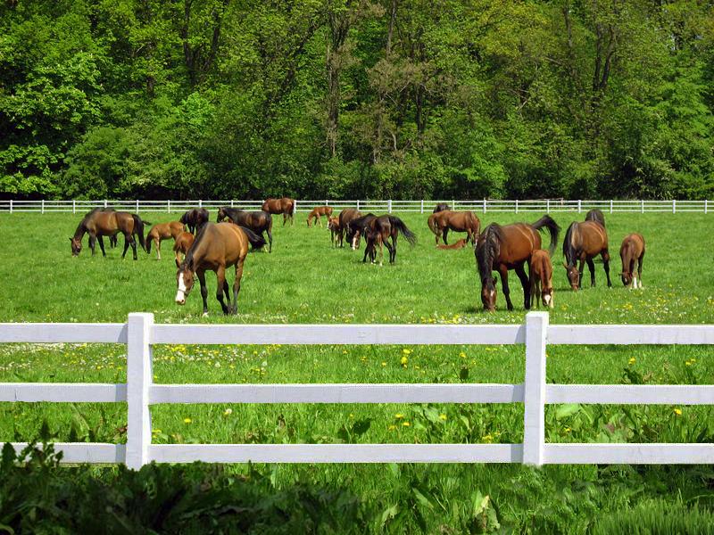 Plastikowe ogrodzenia na bardziej ekologiczne pastwiska